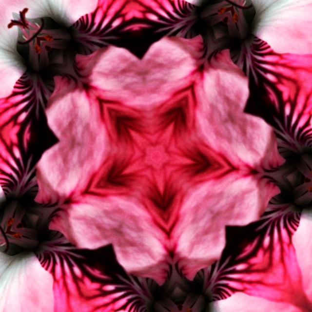Kaleidoscope - Flower