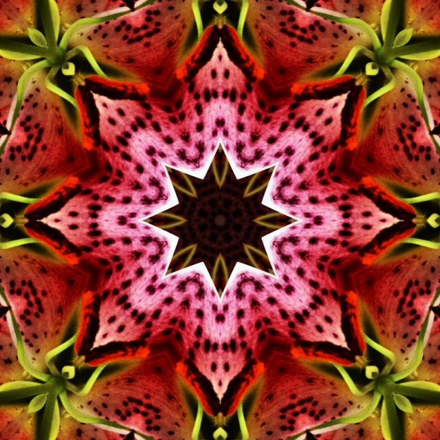 Kaleidoscope - Lilly I