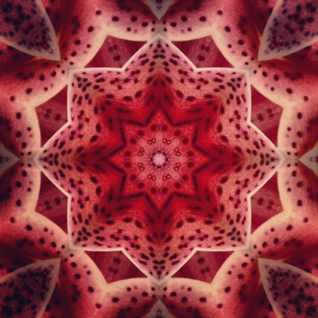 Kaleidoscope - Lilly II