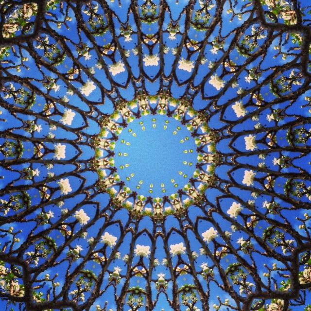 Kaleidoscope - Plum Blossom II- Joakim Lund