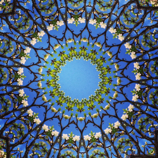Kaleidoscope - Plum Blossom - Joakim Lund