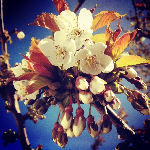 Flowers II by Joakim Lund