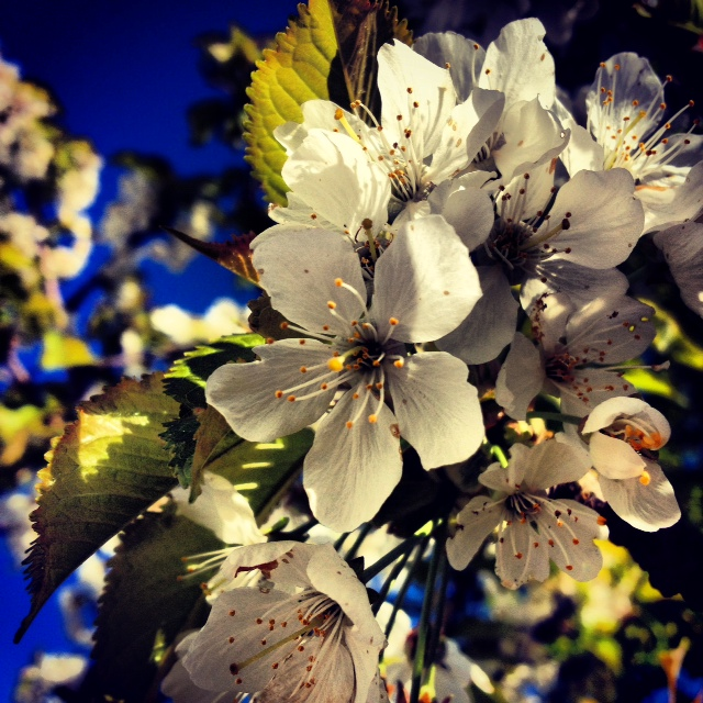 Flowers by Joakim Lund