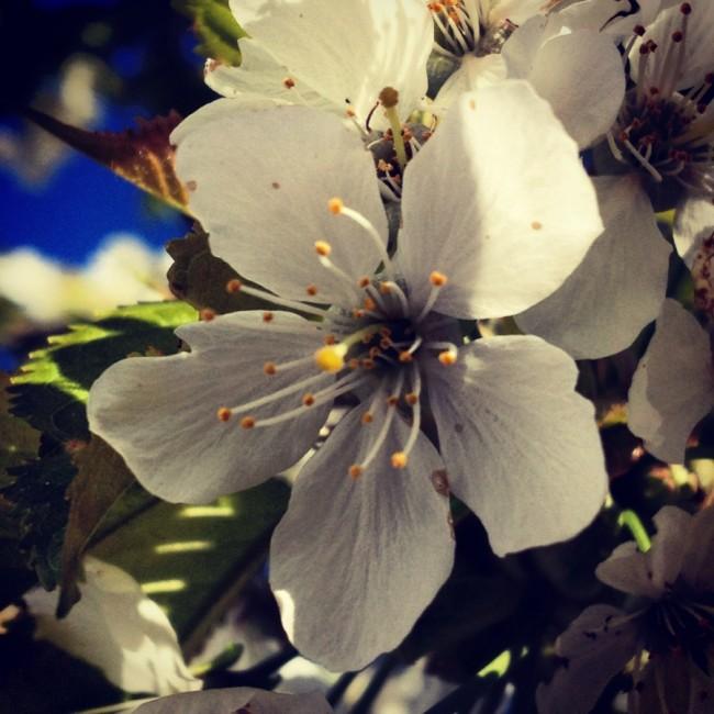 Flowers IX by Joakim Lund