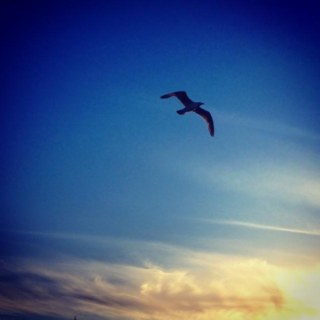 Seagull by Joakim Lund