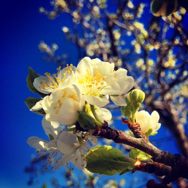 Springtime Blossom by Joakim Lund 2015