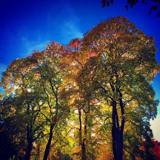 Oslo Autumn III by Joakim Lund 2015