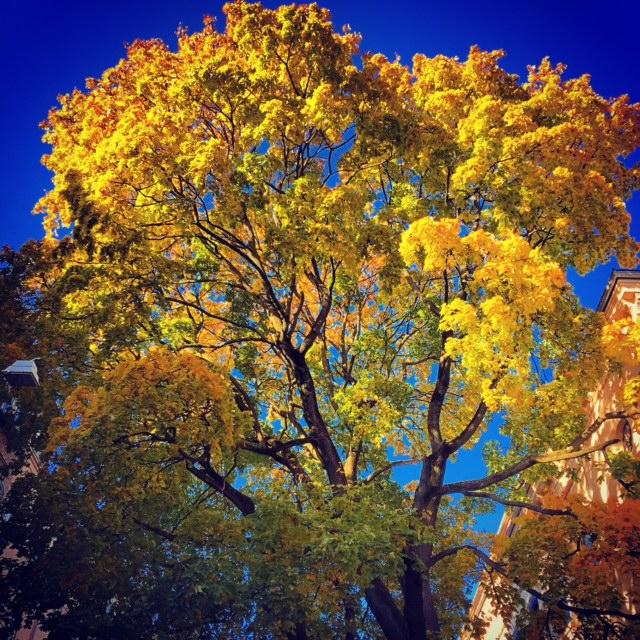Oslo Autumn II by Joakim Lund 2015