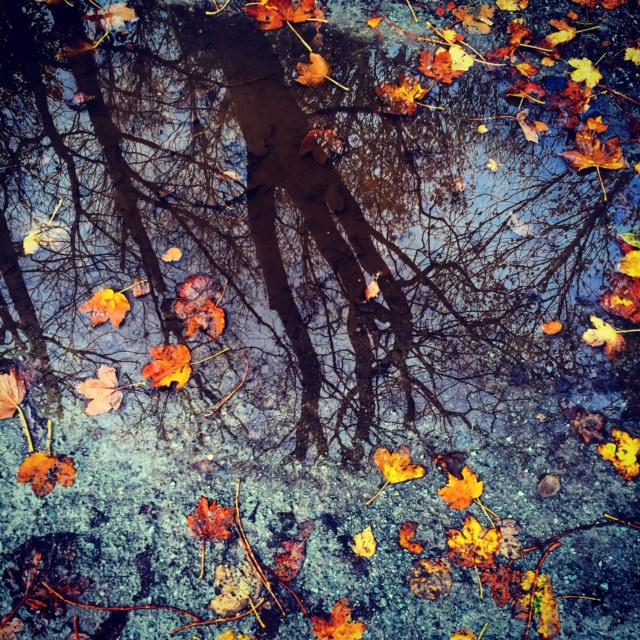 Autmn by Joakim Lund 2015
