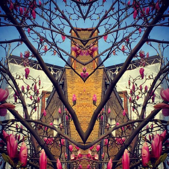 Magnolias II - Joakim Lund 2016