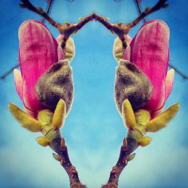 Magnolias III - Joakim Lund 2016