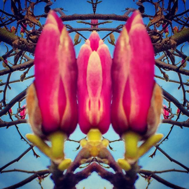 Magnolias V - Joakim Lund 2016